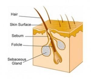 how-hair-grows
